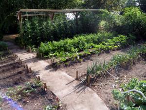 Best Vegetable Garden Mittleider Method Review